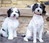 Thiensville Doggos