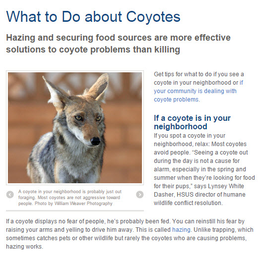 What to do about coyotes