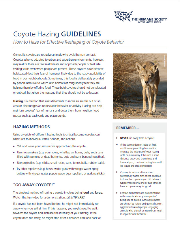 Coyote Hazing Fact Sheet